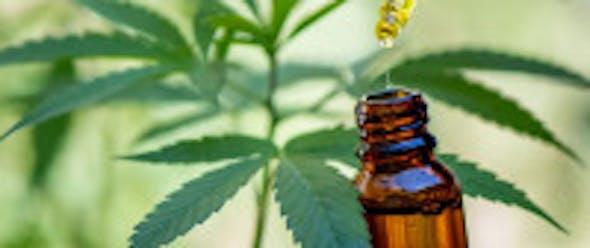 Cannabisöl vs. CBD Öl – was ist der Unterschied?