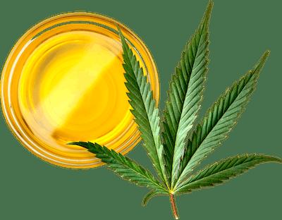 CBD Bio Öl von Hanfosan